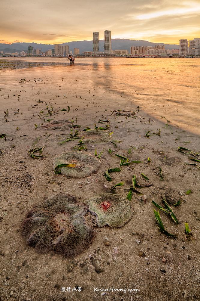 Penang Seagrass bed